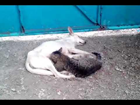 Xxx Mp4 A Dog Breastfeeding A Cat 3gp Sex