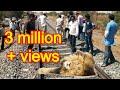 Download Video Download ट्रेन एक्सीडेंट से घायल युवा शेर को कैसे बचाया How a injured lion from a train accident is rescued 3GP MP4 FLV