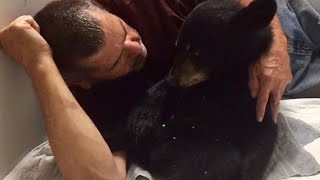 Baby Bear That Was Nearly Killed by Car is Now in Recovery