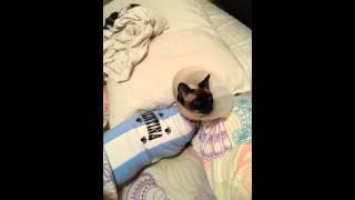 Mi gata Maggie no se quiere levantar de la cama!!