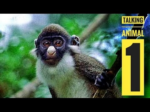 Talking Animals Funny dubbed marwari comedy (Ambika Dj Novi) desi Rajasthani video