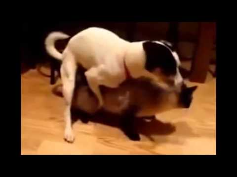 Cat mating dog  : )