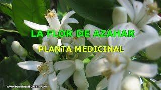 La Flor de Azahar - Propiedades y Beneficios