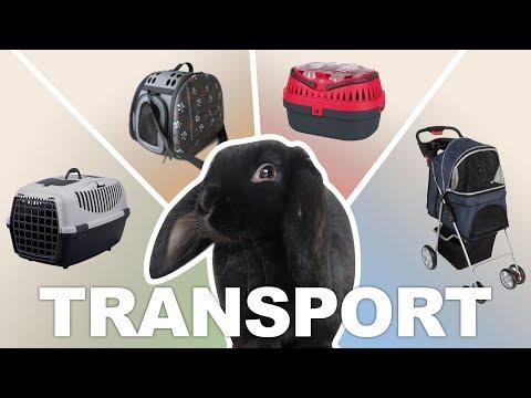 Xxx Mp4 Transporter Son Lapin Les Cages De Transport 3gp Sex