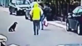 Cesur köpek kadını kapkaççıdan kurtardı