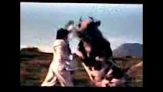 (R)(R)Vaca karateca