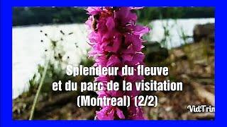 Splendeur du fleuve et du parc de la visitation (Montréal) (2/2) HD