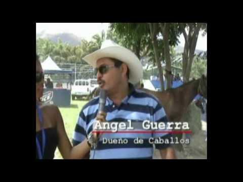 TOROS COLEADOS ESTADO ARAGUA