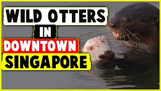 WILD Otters in Downtown Singapore - Best Airport Layover Ever