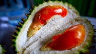 Red Durian Contest Banyuwangi Indonesia