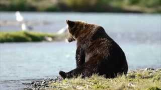 Discover Kodiak Destination Video