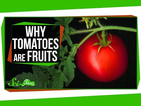 Xxx Mp4 Why Tomatoes Are Fruits And Strawberries Aren T Berries 3gp Sex