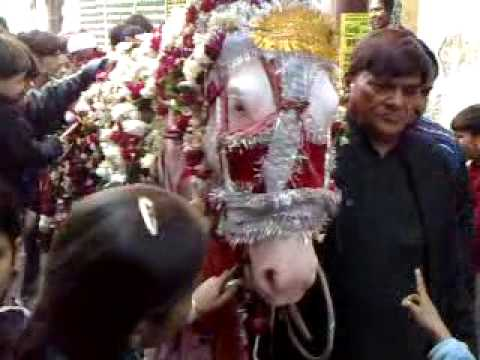 7th Muharram Zuljana Duldul entering Dr. Mustafa s residence Daira Allahabad 25th Dec 09