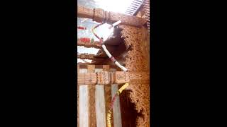 Humble himachal NARAYAN DEVTA TEMPLE rohru Pt.2