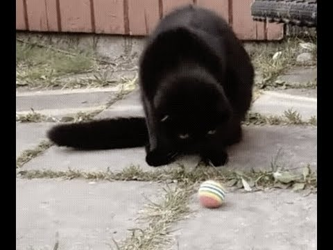 PUSSY DESTROYED BY BALL