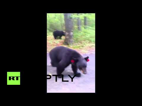 watch USA: Hiker escapes unharmed after dangerous encounter with black bears