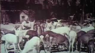 Ross Allen Reptile Institute (1929-1969), Coral Springs, Florida