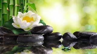 8 Hours of Relaxing Sleep Music: Soft Piano Music, Deep Sleeping Music, Meditation Music ★102