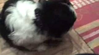 Buhtla pes moj