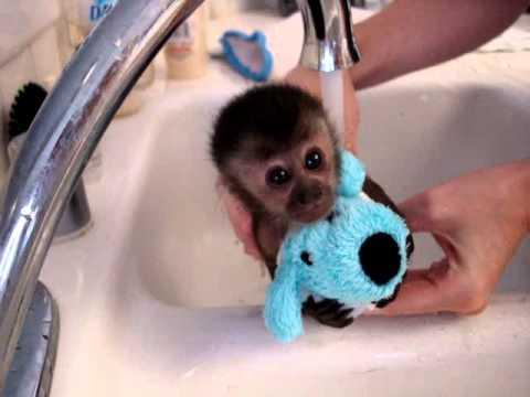 Xxx Mp4 Baby Monkey Nala Gets A Bath 3gp Sex