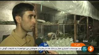 Iran Traditional Silkworm farming, Mobarakeh county پرورش سنتي كرم ابريشم مباركه ايران
