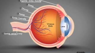 Human Eye Structure: Eye Anatomy Explained