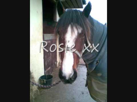 Xxx Mp4 Sorley Horses Xx 3gp Sex