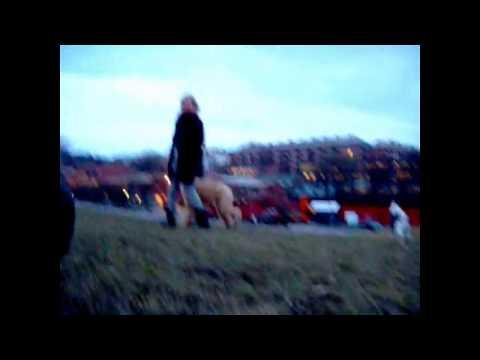 18+ JULIE AND MY DOG HUMP FAIL - SEX DWARF CAUGHT ON CAMERA  (الحيوانات الجنس
