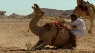 Trying To Ride A Crazy Camel - Ben & James Versus The Arabian Desert - BBC