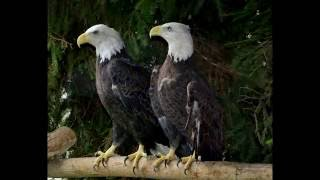 Deborah Ritch Photography - Hawk Creek Wildlife Center,Inc.