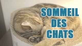 Tout savoir sur le sommeil des chats