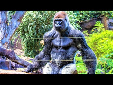 Xxx Mp4 10 Most Powerful Animals On Planet Earth 3gp Sex