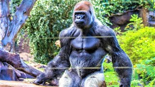 10 Most Powerful Animals on Planet Earth