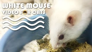 ENTERTAINMENT FOR CATS: White Mouse Video for Cats to Watch.