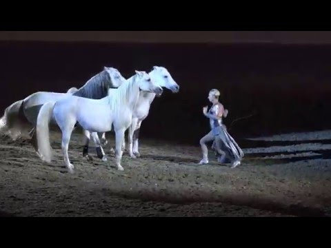 Liberty with 3 horses Sylvia Zerbini Night of the Horse 2016 Del Mar National Horse Show