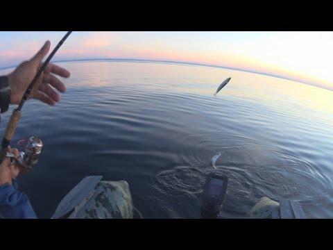 рыбалка на баунте летом видео