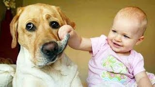 AWW! This Cute babies Will MELT Your Heart - Funny Babies Laughing At PETS Compilation