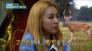 [Secretly Greatly] 은밀하게 위대하게 - Sandara Park worry about younger brother 20170108
