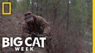Fresh Kill | Big Cat Week