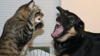 صراع القطط مع الكلاب لايفوتك ضحك حتى البكاء ههههههه