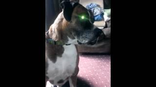 Robo Coop reacts to Gozer video