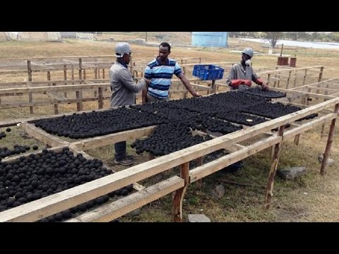 Xxx Mp4 Human Poo Transformed Into Clean Fuel For Kenya S Urban Poor 3gp Sex