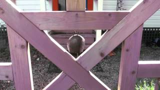 Sound Test: New Bell on the Garden Gate