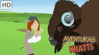 Aventuras com os Kratts - A Melhor Experiência de Vida Selvagem (1 HORA!)