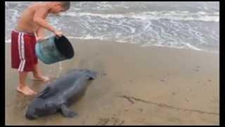 Hermanitos de Mayagüez Ganan Reconocimiento por Rescatar Bebé Manatí Varada a Orillas de la Playa