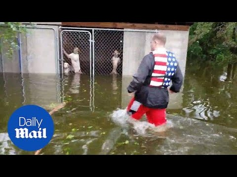 Xxx Mp4 Incredible Moment Six Dogs Are Rescued Hurricane Florence Flooding 3gp Sex