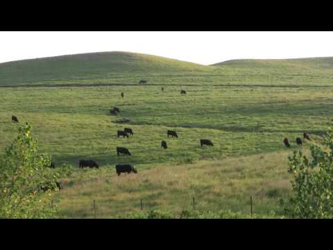 Differences Between High, Medium, Low-Profit Cow-Calf Producers