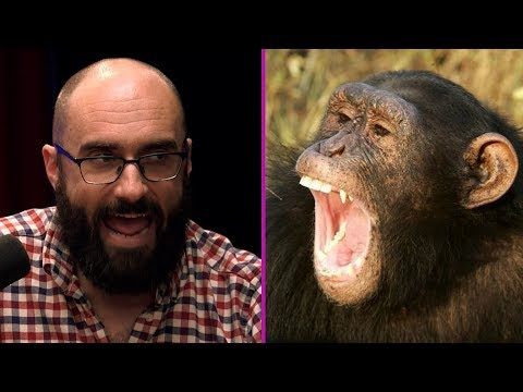 Chimps Have Photographic Memory Ft. Vsauce
