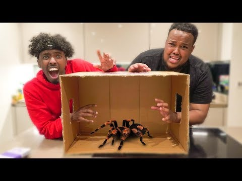 What s In The Box Challenge Win 10 000 LIVE ANIMALS