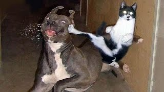 Awesome animal funnies and cuties - Dogs, cats & much more - Watch and enjoy